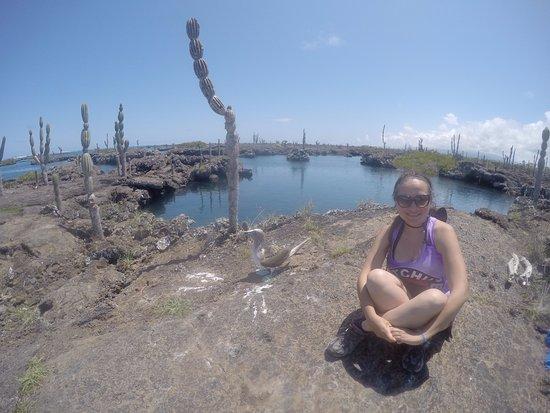 Puerto Villamil, เอกวาดอร์: Con piquero de patas azules