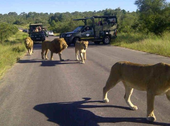 Hazyview, Sydafrika: Sighting in the Kruger National Park
