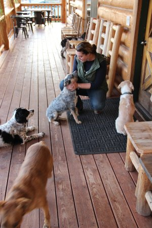 Mc Coy, CO: ALL THE CATTLE DOGS!