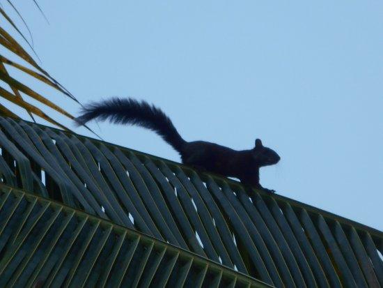 Cabanas Safari : ook de eekhoorntjes voelen zich er thuis