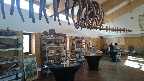 La Rioja, Spanien: Dinosaurios