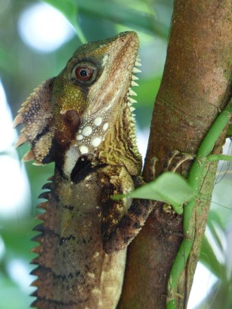 Daintree, Australia: photo2.jpg