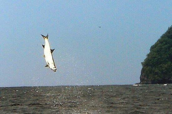 Diego Martin, Trinidad: Flying high