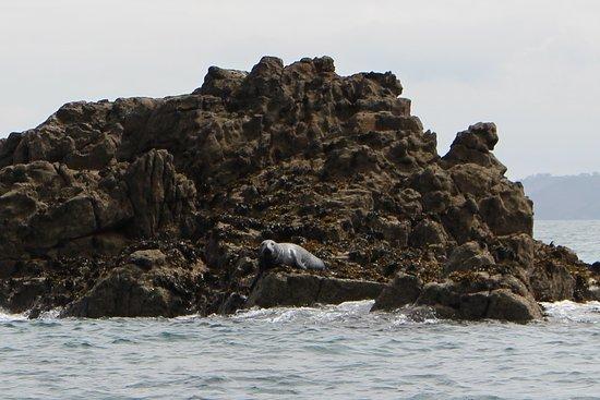 Island RIB Voyages: large seal