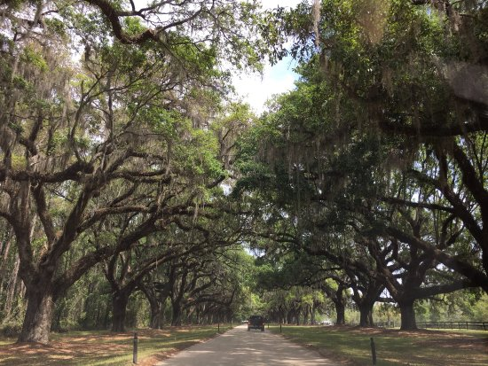 Mount Pleasant, Carolina Selatan: Boone Hall - Beautiful grounds.