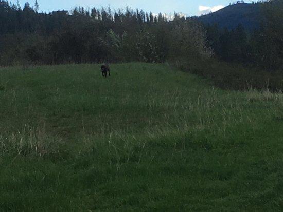 Kamiah, Айдахо: photo1.jpg