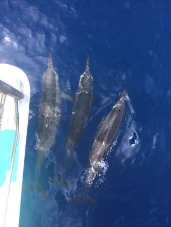Kawaihae, Hawaï: Once again a PERFECT morning with Captain B and Ashley. If you only do one outing while on the B