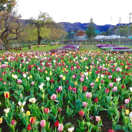 Hitsujiyama Park: photo5.jpg