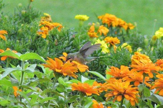 Dubuque, IA: Hummingbirds were active