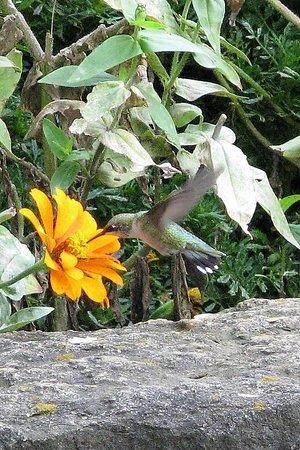 Dubuque, IA: Hummingbird having lunch
