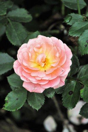 Dubuque, IA: Beautifiul flower
