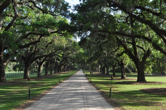 Mount Pleasant, Carolina del Sur: The Live Oak-lined entrance to Boone Hall Plantation!