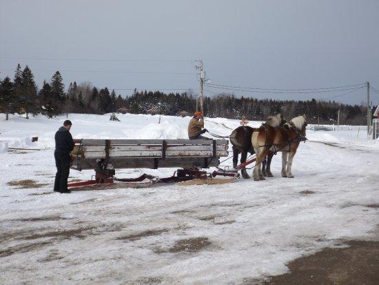 Broadleaf Guest Ranch: horse trail ride