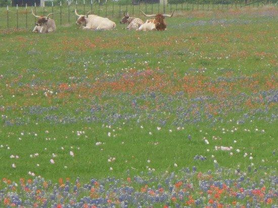 Ennis, TX: photo0.jpg