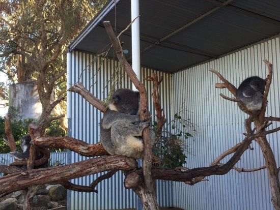 Seddon, Australien: photo2.jpg