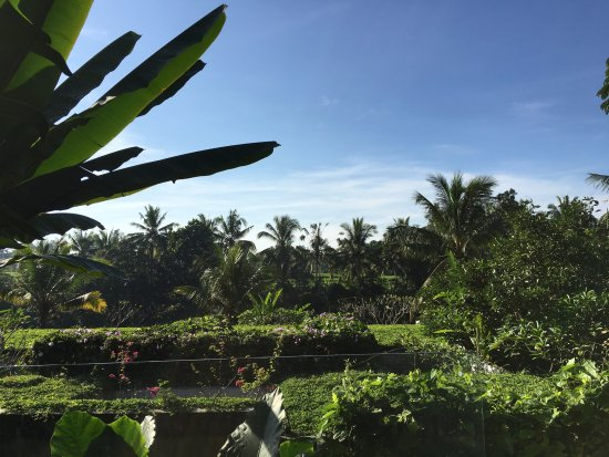 Ubud Green: view from Firefly Restaurant