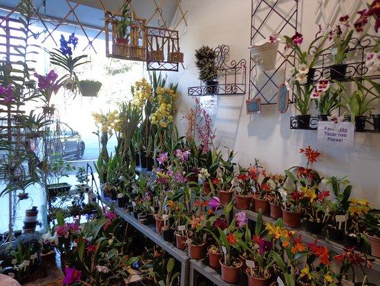 Orquídeas e Cia