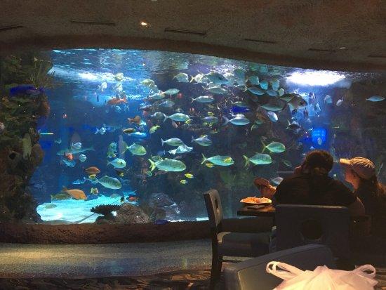 Picture Of Aquarium Restaurant Nashville