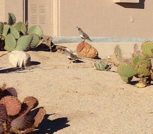 Yucca Valley, CA: photo3.jpg