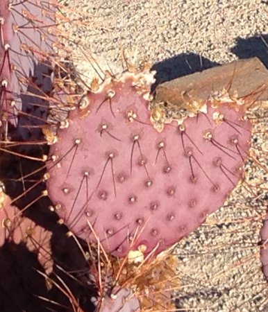 Yucca Valley, CA: photo4.jpg