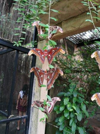 Melaka Butterfly and Reptile Sanctuary: IMG_20170422_115106_large.jpg