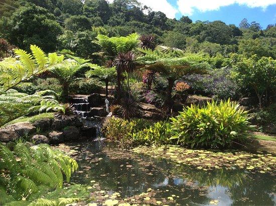 Maleny, Australia: photo9.jpg