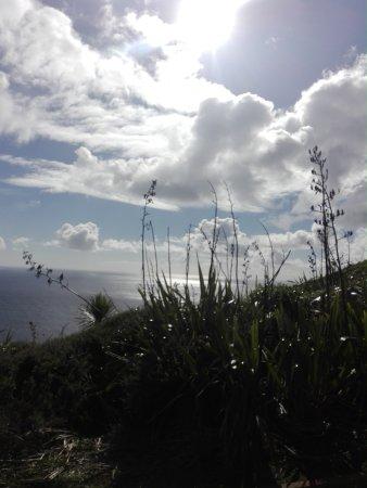North Island, Yeni Zelanda: IMG_20170418_100723_large.jpg