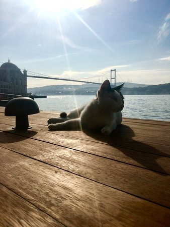 Radisson Blu Bosphorus Hotel, Istanbul: Pussy cat tanning on Bosphorous