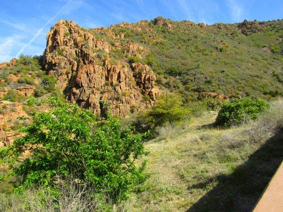Prescott, AZ: Rocky