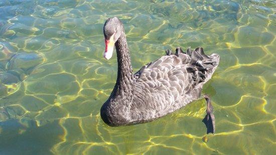 Nelson-Tasman Region, Selandia Baru: Nelson Lakes National Park