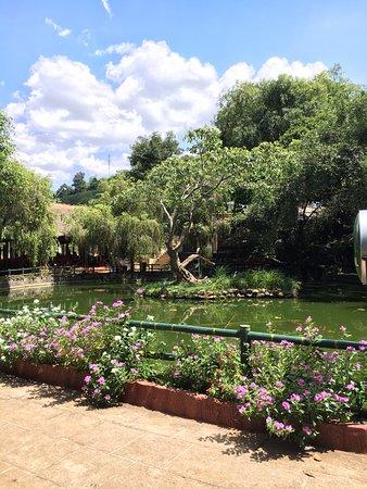 Pleiku, Vietnam: hồ này có mấy con cò nữa nè. Còn có nhà cho cò ở nữa. Hay thật. Xung quanh toàn cây lớn với nhaf