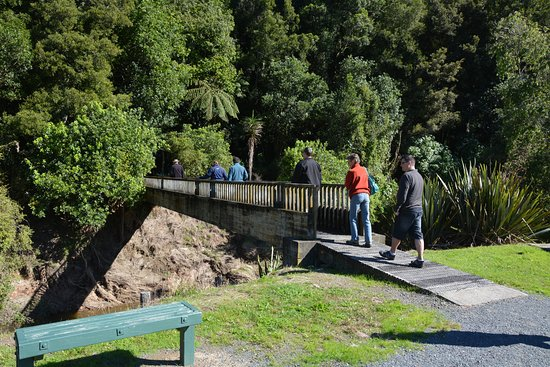 Whakatane, New Zealand: Bush walk