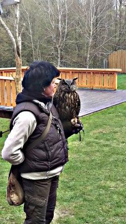 Nindorf, Niemcy: Greifvogelvorführung sehr sehenswert