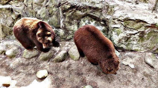 Nindorf, Niemcy: Sehr unternehmungslustige Bären