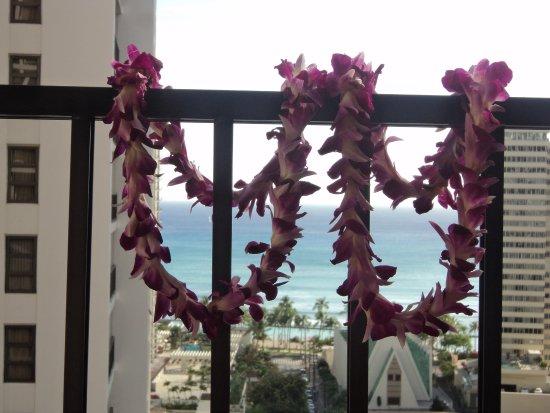 Darmic Waikiki Banyan Photo