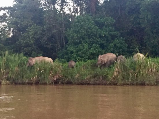 Kinabatangan District, Malesia: Goes with Rustic review. Great wildlife but rooms need painting and new pillow!!