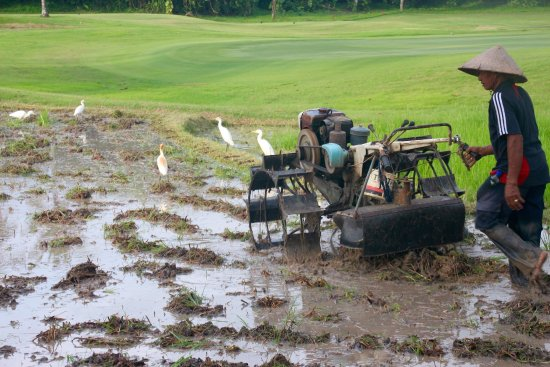 Klub Golf Nirwana Bali: Flot bane.