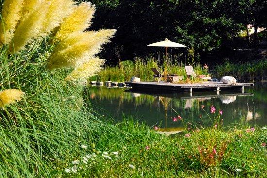 piscine naturelle photo de bamboo tha lourmarin tripadvisor. Black Bedroom Furniture Sets. Home Design Ideas