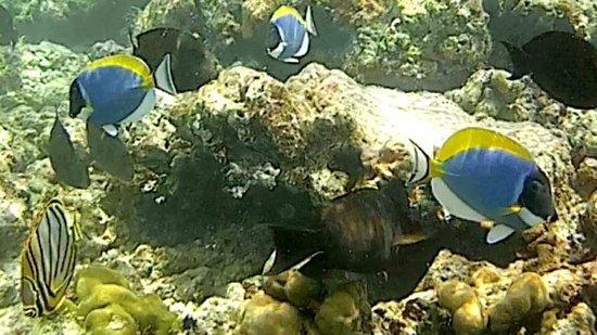 Haa Alif Atoll: photo0.jpg