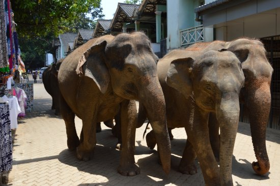 Пиннавала, Шри-Ланка: la passeggiata
