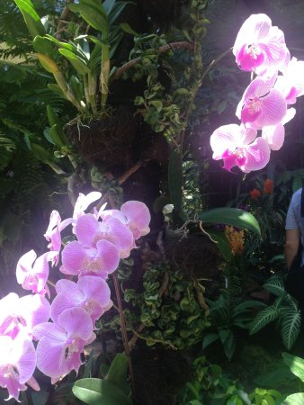 Photo of Botanical Garden National Orchid Garden at 1 Cluny Rd, Singapore 259569, Singapore