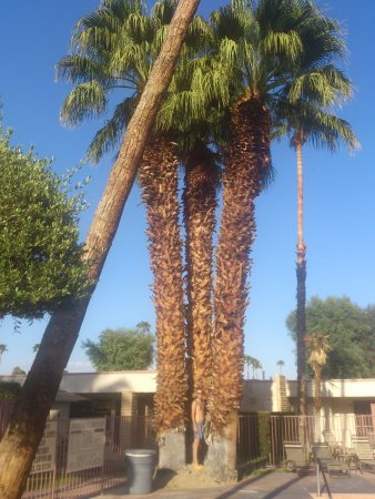 Desert Isle of Palm Springs: Alt eingewachsener Garten