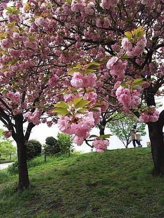 Meguro, Japan: 1492838706021_large.jpg