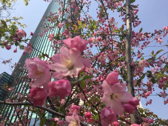 Sheraton Seoul D Cube City Hotel: photo7.jpg