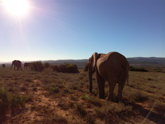 Addo Elephant National Park, Sudáfrica: IMG_20170421_154650_large.jpg