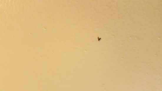 Comfort Suites Beaufort: Dead bugs on bathroom ceiling!