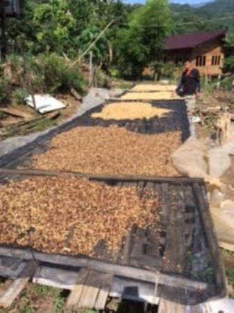 Next Step Thailand (Travel with Joe) Cycling and Hiking Private Day Tours : Coffee beans