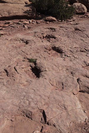 Sauropod Tracks Copper Ridge Dinosaur ...