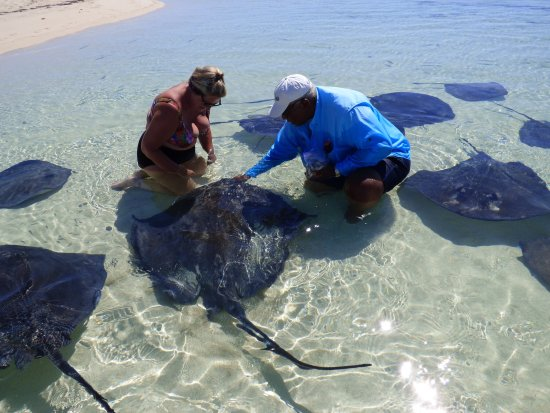 West End, Grand Bahama Island: Westend Ecology Tours, Grand Bahamas with Stingray whisperer Keith Cooper.  Incredible day!