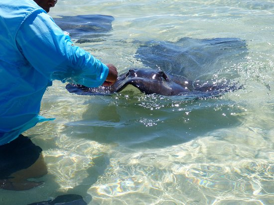 West End, Остров Большой Багама: Westend Ecology Tours, Grand Bahamas with Stingray whisperer Keith Cooper.  Incredible day!